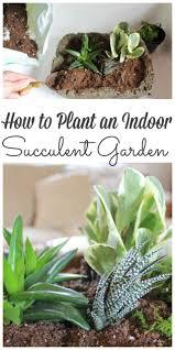 indoor succulent garden lehman lane