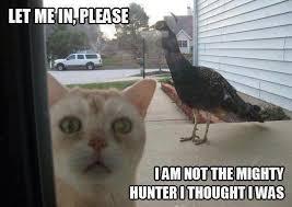 Crazy Bird Meme - let me in please funny meme funny memes