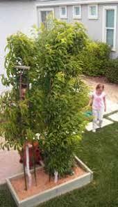 Creating A Backyard Orchard - Backyard orchard design