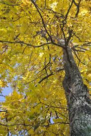 50 poem lovely tree images nature