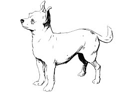 Coloriage chien  chihuahua  img 13704