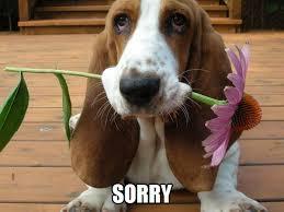 Sorry Meme - what s meme sorry