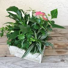 plant delivery san juan capistrano florist flower delivery by the white dahlia