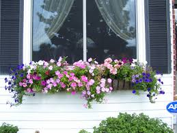 Window Flower Boxes Noted Cascading Flowers For Window Boxes Summer Box Contest Www