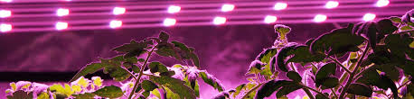 best led grow lights high times 2017 hps vs led grow lights the ultimate efficiency showdown the green