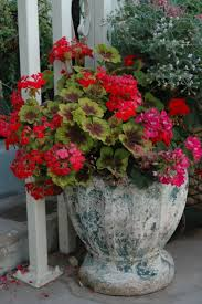 4173 best potted plants images on pinterest plants potted