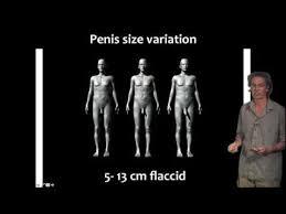buildpenis review 100 natural penis enlargement solution youtube