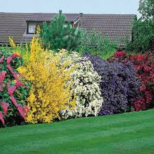 natural hedges to block neighbors u0026 privacy wall garden ideas