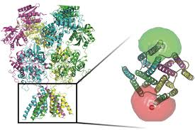 researchers use light sensitive molecules to track proteins