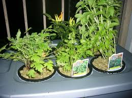hydroponics at home and for beginners 11 steps with pictures