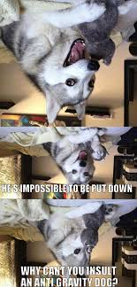 Pun Dog Meme - funniest bad pun dog memes mne vse pohuj