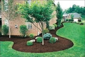 small landscape tree horizontal cordon small ornamental trees