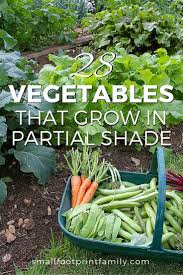 28 vegetables that grow in partial shade small footprint family