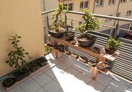 regal balkon bonsai auf einem bonsairegal bonsai bäume selber