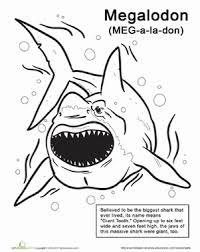 color monstrous megalodon worksheet education