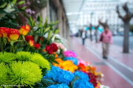 florist shops florist shops parliament gtp headlines