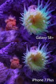 Turtle Back Zoo Lights by Galaxy S8 Vs Iphone 7 Which Camera Is Better Cnet