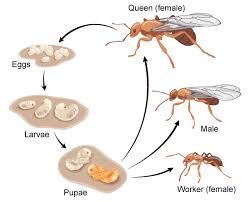 individual cycle ants asu biologist