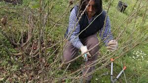 cura giardino torna al giardino di casacoc羇 il 窶彡orso di potatura e cura delle
