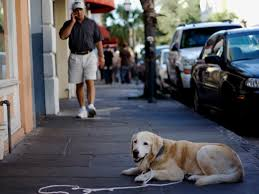 dog friendly charleston where to hang in the holy city with man u0027s