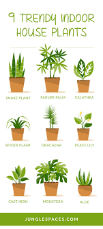 house plants that don t need light indoor plants that don039t need light dayri me