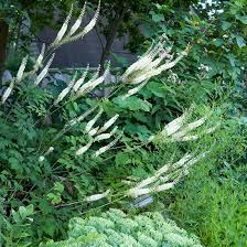 perennial flowers by season