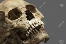 Human Anatomy Skull Bones Human Anatomy Ancient People Skull Bone Stock Photo Picture And