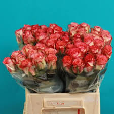 wholesale roses wholesale directory duet roses wholesale roses