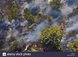 Wildfire Near Fort Collins Colorado by Aerial View Of A Wildfire And Smoke Near Cassis Provence France