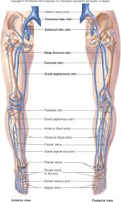 Foot Vascular Anatomy Unit 1 Lecture 3