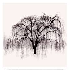 tree willow tree pencil and in color tree willow tree