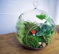 53 best terrariums images on pinterest terrariums moss