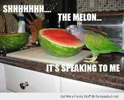 Parrot Meme - i can has cheezburger parrots funny animals online cheezburger