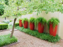 modern tall planters filled with asparagus ferns find similar