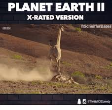 X Rated Friday Memes - planet earth ii x rated version scheifferbates bbc 1 wallofcomedy