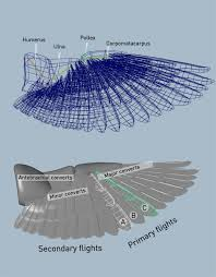 Bird Wing - how to setup a 3d bird wing skygoblin