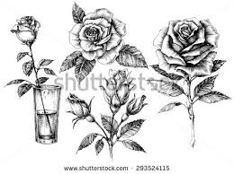 design flower rose drawing rose drawing vector download free vector art stock graphics images