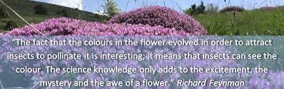 Life Of A Flower - the secret life of armenia u0027s floral kingdom world land trust