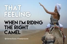 Camel Meme - riding the right camel stereolizza sexposure meme flickr