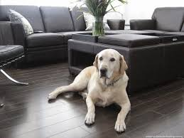 best wood floor finish for pets carpet vidalondon