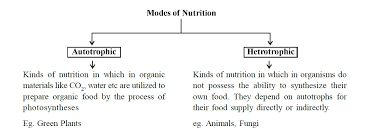 4 tips for nutrition in human beings class 10 cbse