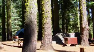 crane flat campground drive through yosemite hd youtube