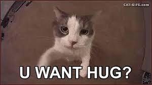 Cat Hug Meme - you want a hug gif hugyourcatday hug cat discover share gifs