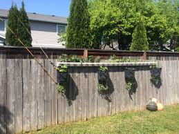 nautical themed fence gardening hanging tomato buckets using the