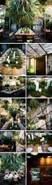 staghorns greenhouse pinterest restaurants idea store