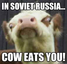 Funny Cow Memes - in soviet russia cow eats you deranged cow quickmeme