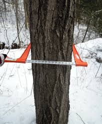ontario maple syrup production report on february 26 2015