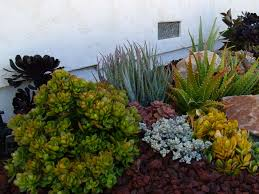 13 succulents that are native ultimate guide to succulents types of succulents world of