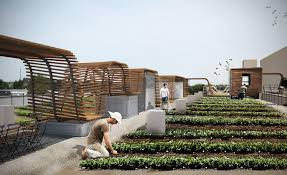 10000 sq ft house downtown st louis to sprout its first rooftop farm st louis