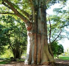 thick tree by mercurial stock on deviantart